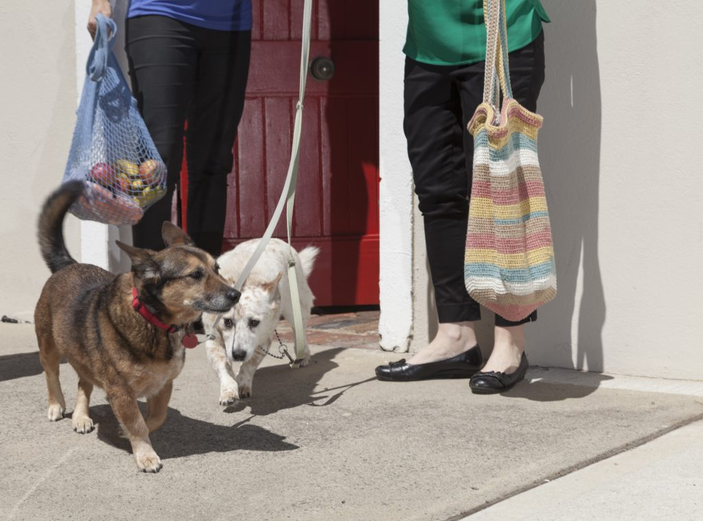 Two women with reusable shopping bags and dogs